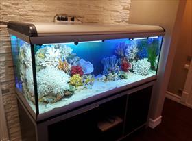 Пресноводные аквариумы   Искусственные декорации