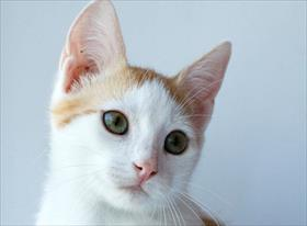 Съёмка животных (коты)