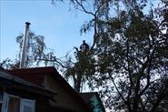 Спил дерева в частном секторе.