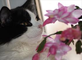 Коты, природа