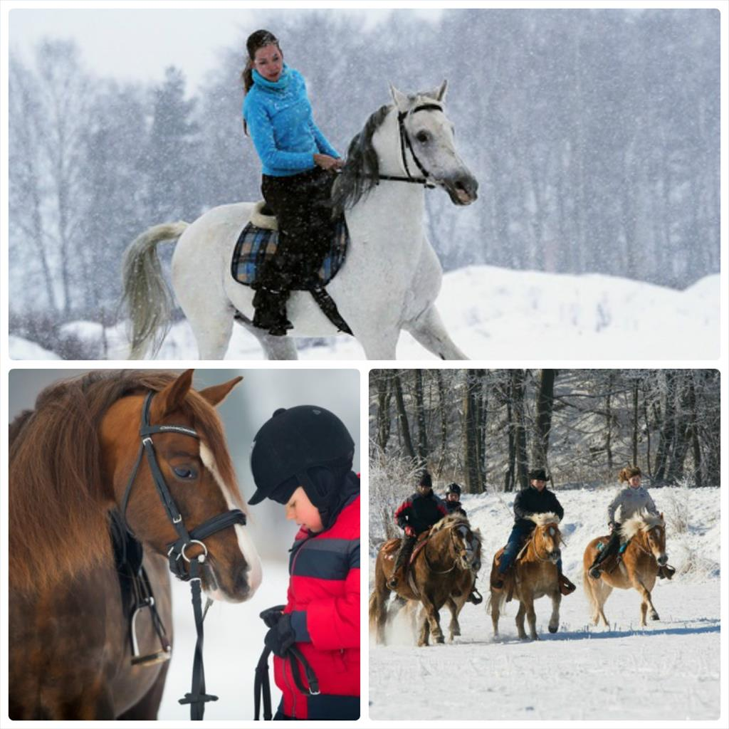 фотосессия зимой с лошадью
